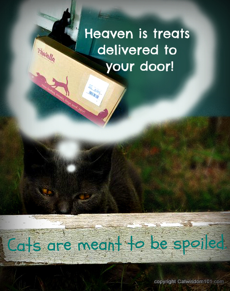 Pawalla-box-cat-review-giveaway-quote