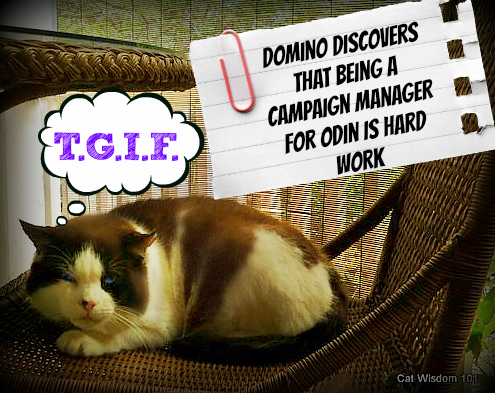 TGIF-cat-campaign-contest-world