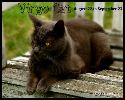 astro-kitty-virgo-cat-astrology-gris gris