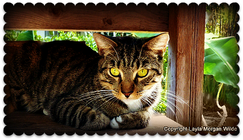 brigid's crossing foundation-cat-sanctuary