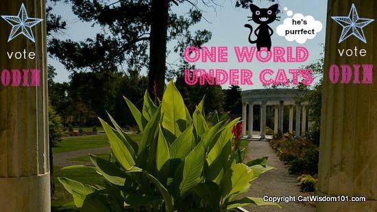 campaign-cat-ruler-world-contest-odin