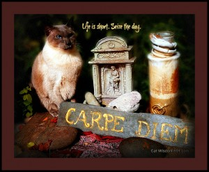 carpe-diem-cat-quote-merlin