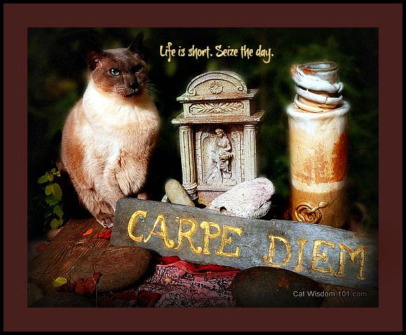 carpe-diem-cat-quote-merlin