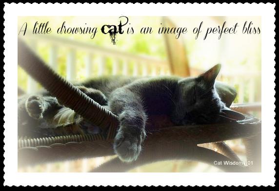 cat-nap-gris gris