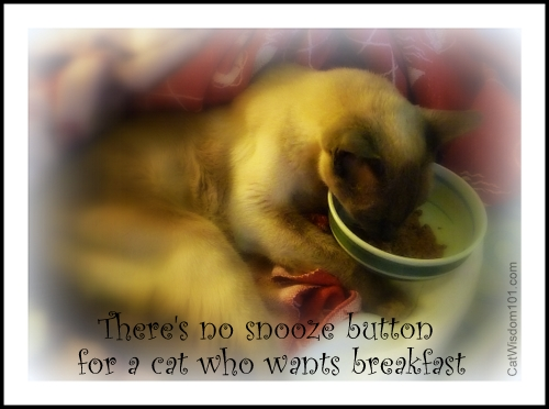 cat-quote-snooze-button-breakfast-merlin
