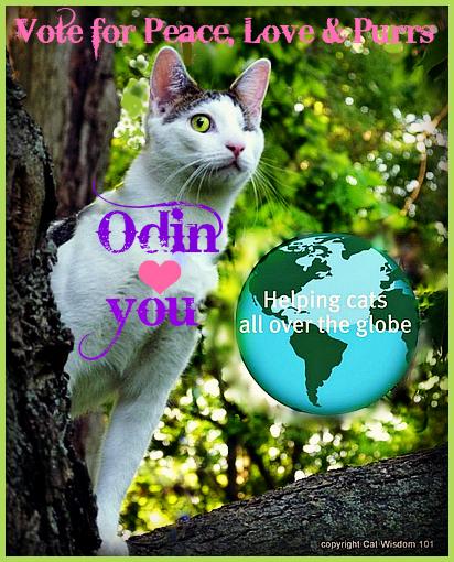cat-ruler-contest-peace-love-purrs