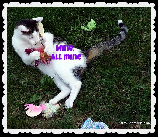 catnip-cat-odin-giveaway