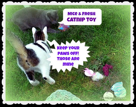 catnip-toys cats-odin-gg