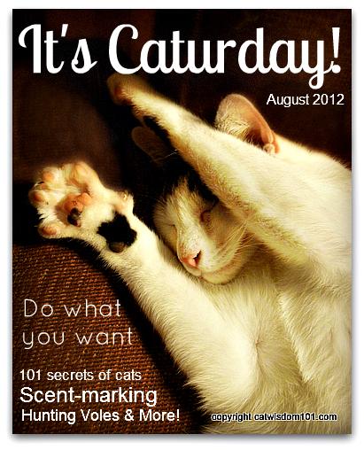 caturday-funny-cat-odin-magazine