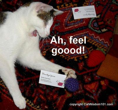 giveaway-funny-cat-catnip