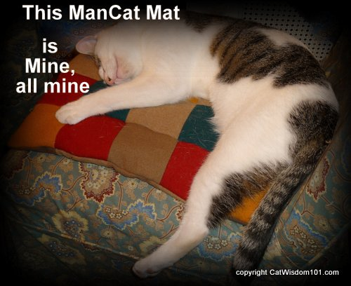 giveaway-mancat-mat-cat-cherry city kitties