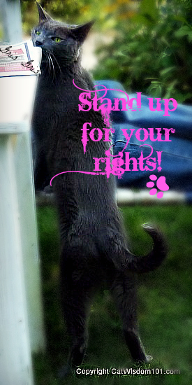 gris gris-cat-standing-quote-rights