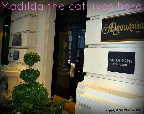 matilda-algonquin-hotel-NYC-cat