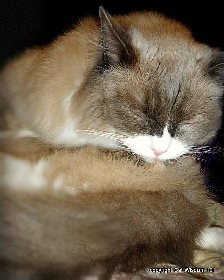 matilda-cat-algonguin-birthday