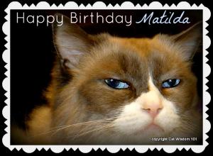 matilda-cat-birthday-algonquin-hotel-nyc-2012