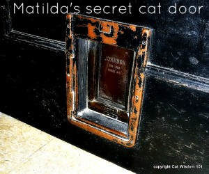 matilda-cat-pet-door-algonquin-hotel