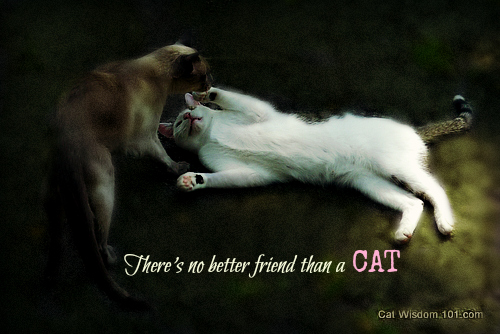 merlin-odin-playing-cats-friends-quote