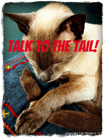 merlin-tail-communication-cats-talk