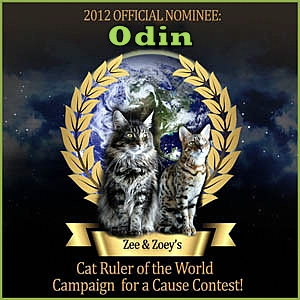 nominee-odin-cat-ruler-world-contest
