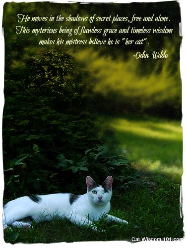 odin-cat-quote-charm-wisdom-mystery