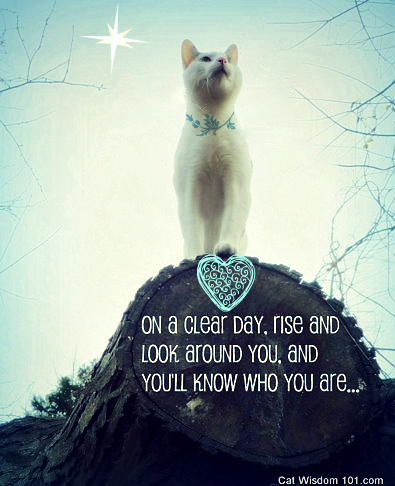 odin-cat-ruler-world-contest-quote