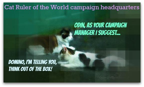 odin-domino-cat-ruler-world-campaign