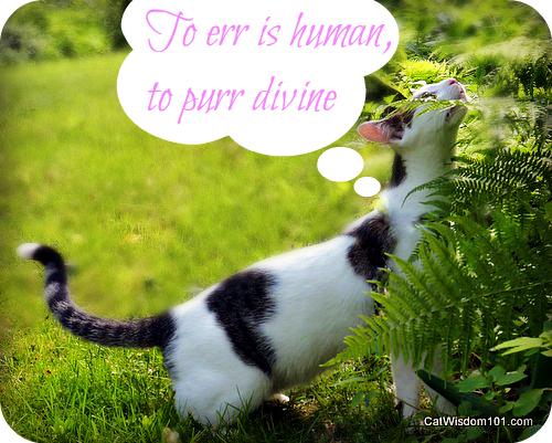 purr-quote-divine-cat