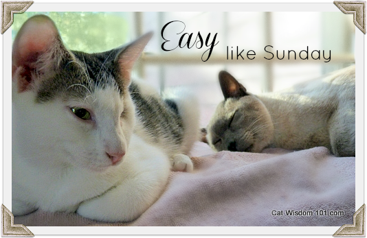 sunday-easy-cats-quote