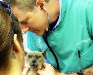 vet-rich-goldstein-merlin-cat-catwisdom 101