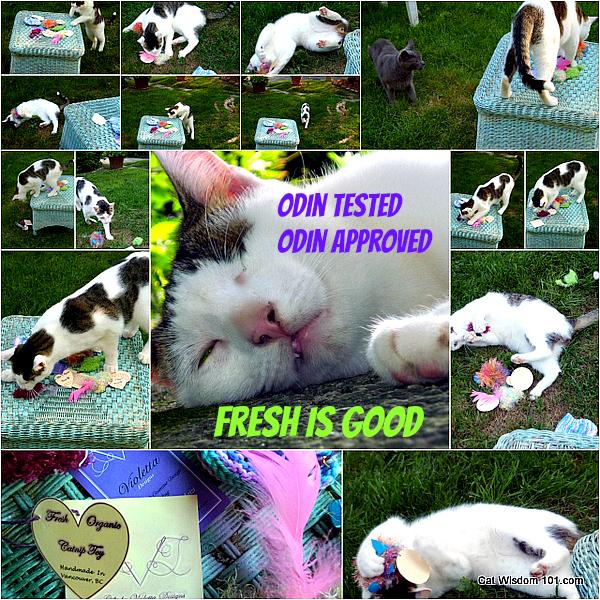 violetta designs-catnip toys-odin-cat
