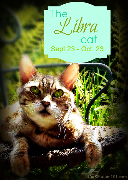 Bengal-cat-astrology-astro kitty-libra