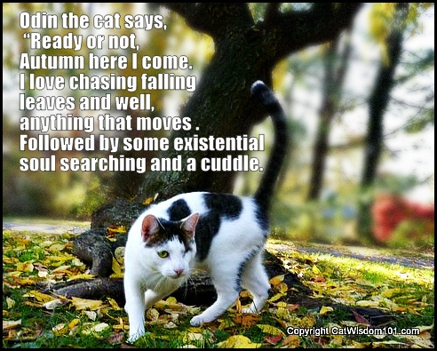 Odin-Autumn-cat-quote-existential-leaves