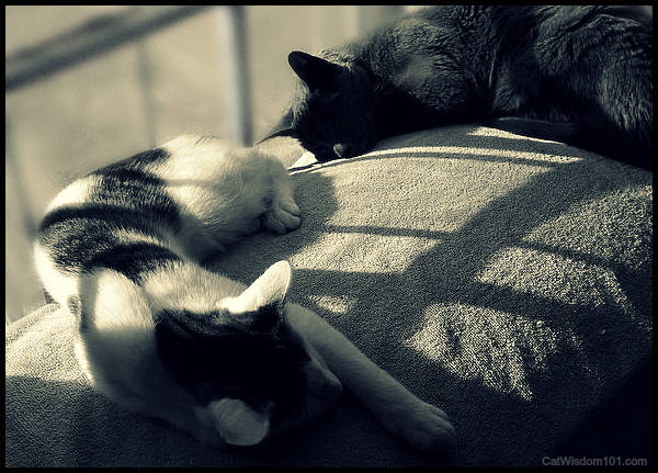 Wordless-cats-art-wednesday