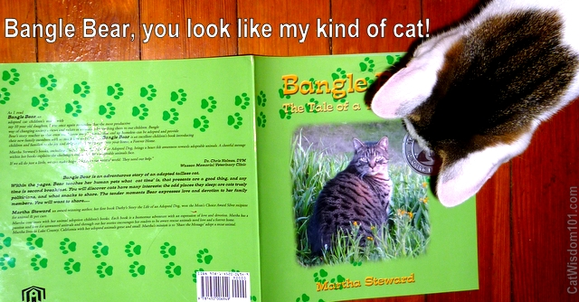 bangle bear-cat-book-review-giveaway