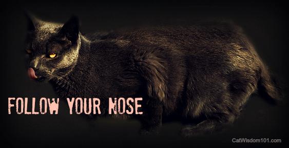 cat-licking-nose-gris gris-cat wisdom 101