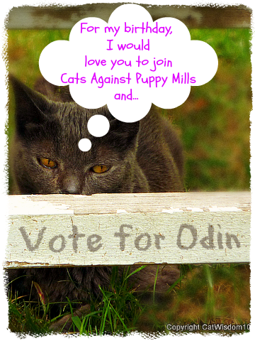 cats against puppy mills-gris gris-vote-odin