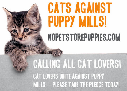 cats against puppy mills-nopetstorepuppies.com-cats-aspca