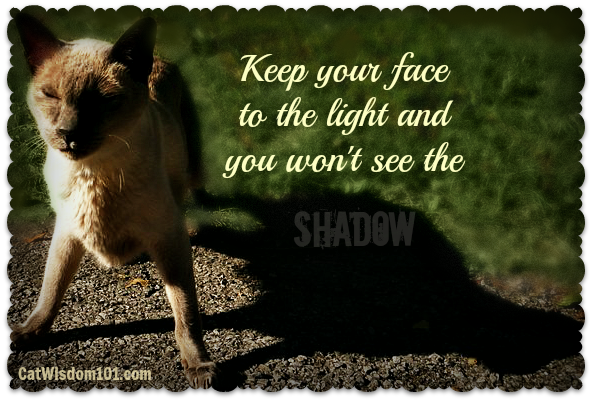 merlin-cat-quote-shadow-light-optimism