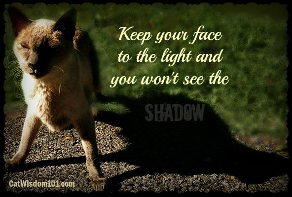 merlin-cat-quote-shadow-light-optimism