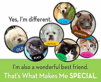 pet finders-campaign-less adoptable-cats-dogs-pets