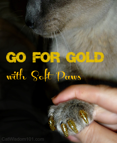 soft claws-cat-gold-merlin-review-giveaway-cat wisdom 101