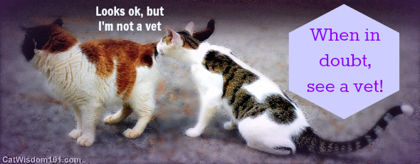 vet-day in the life-exam-cats-vet-LOL