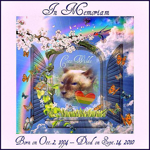 Coco-Rainbow bridge-pet- memorial-Day-cat