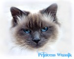 Princess Wussik-Inspiration-The Dalai Lama's cat-himalayan