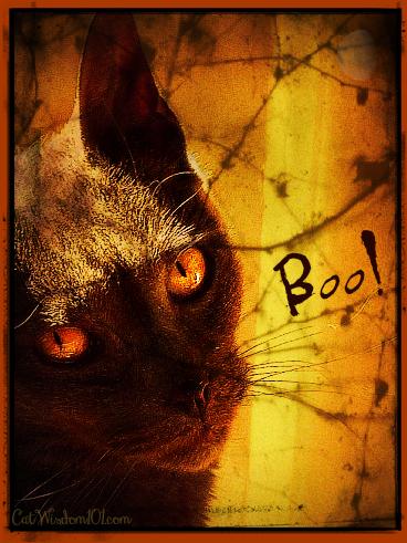 cat wisdom 101-gris gris-boo-halloween