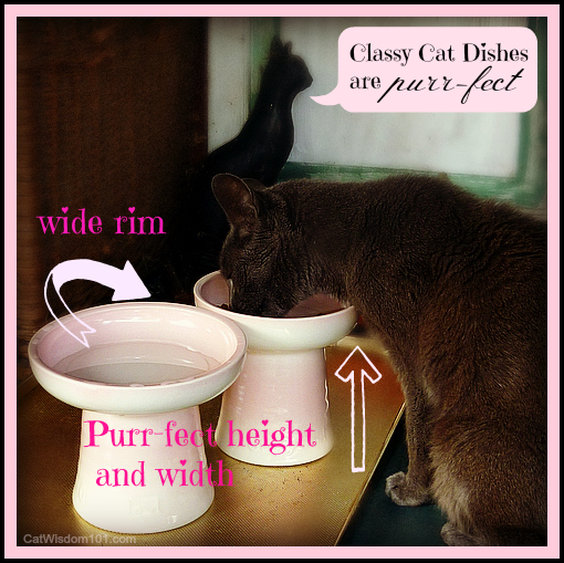 classy-cat-dishes Nine Cat Behavior Lessons