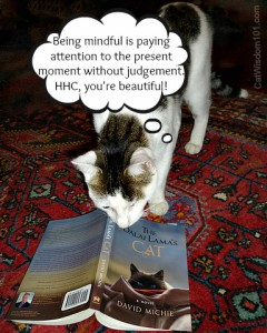 dalai lama's cat-novel-david michie-giveaway-review