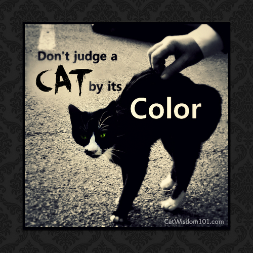 don't judge-cats-by its-color-cover-quote