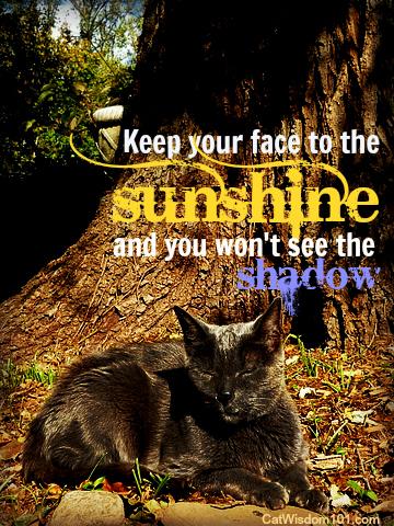 gris gris-cat-quote-sun-shadow