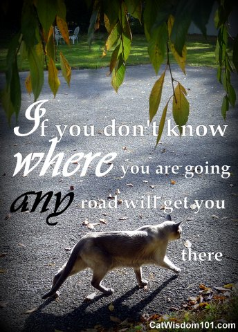 if you don't know where you're going-quote- cats-road